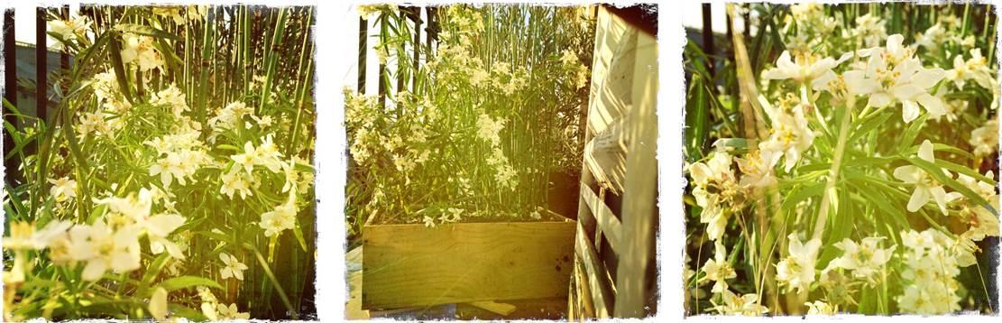 plantes sans entretien majeur
