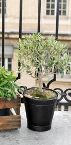 plantes persistantes