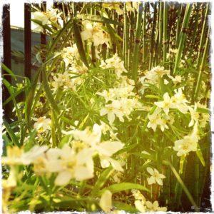 plantes d'hiver