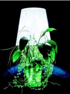 idée déco plante