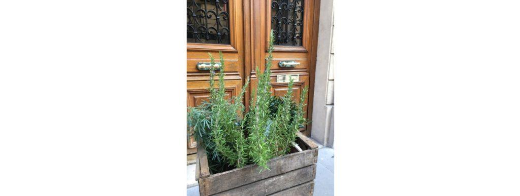 plante a domicile