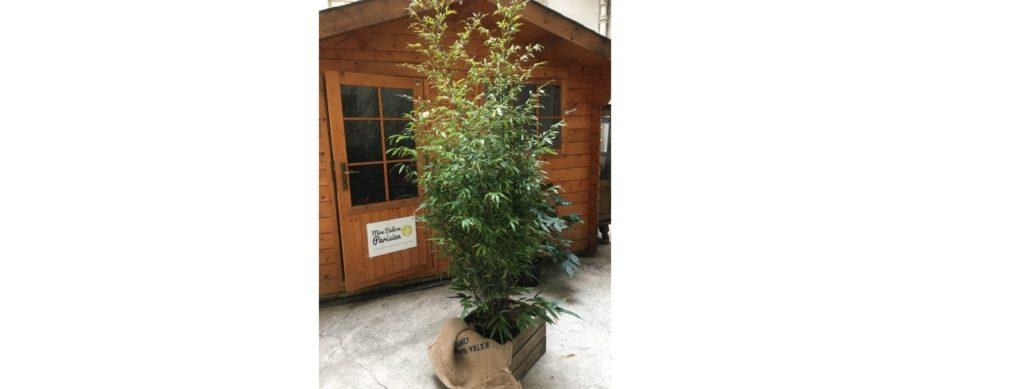 jardinerie en ligne bambou