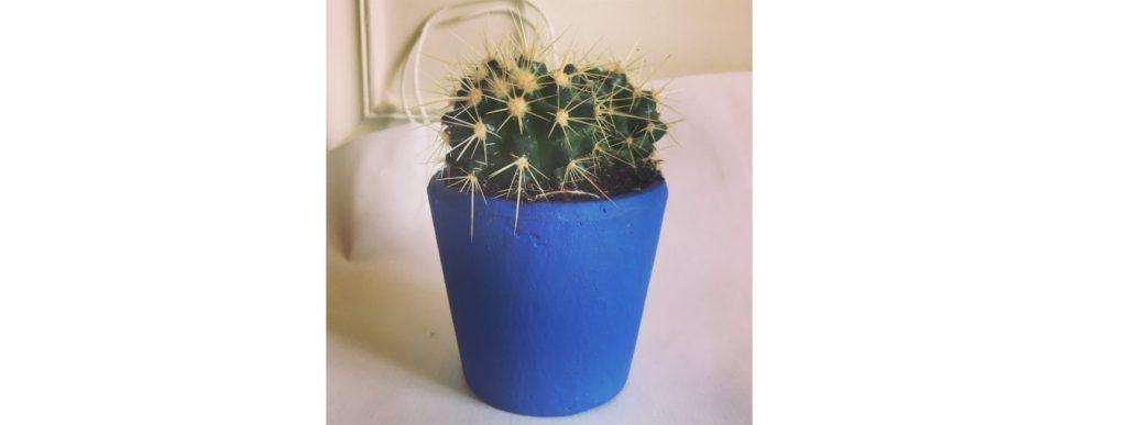 jardinerie en ligne cactus