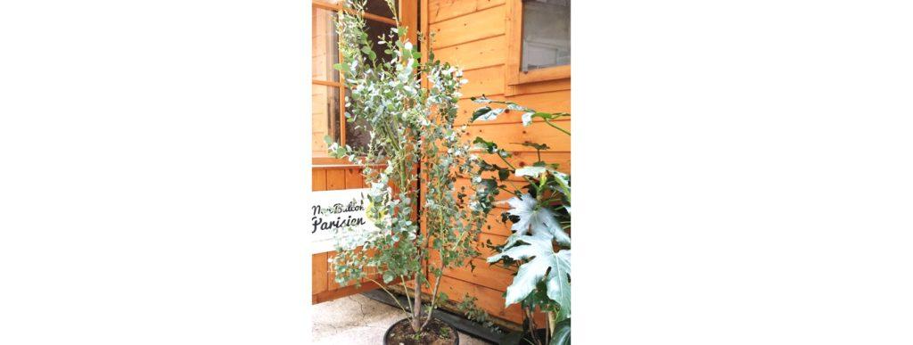 jardinerie en ligne