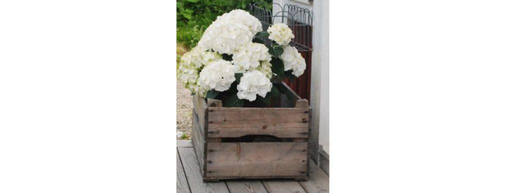 hortensia balcon paris