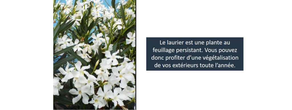 livraison plantes paris laurier