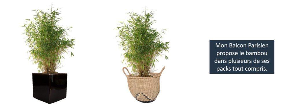 livraison plantes paris bambou