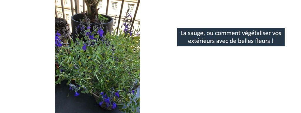 fleurs balcon