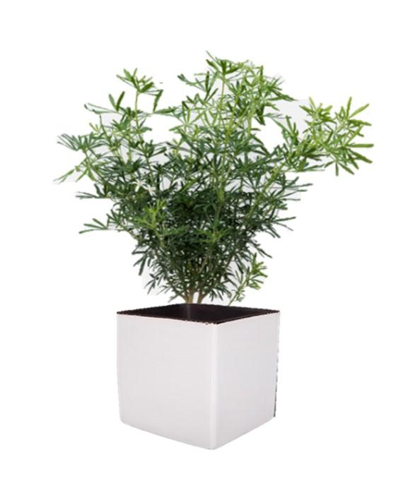 Cube blanc intrépide