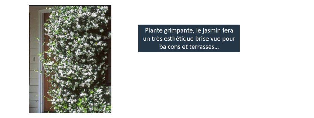 jasmin plante balcon